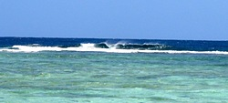 Erakor Island Reef Coral Left's photo