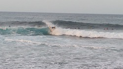 fantail, Dunes photo