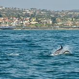 Dolphin off San Clemente Pier