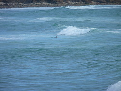 average waveconditions around High Tide, St Tugen photo