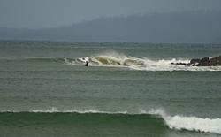 Cremorne Point photo