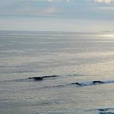 Mal Wave?, Petes Reef