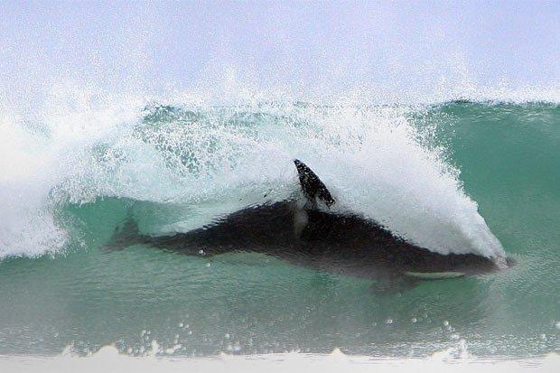 Fort. Ebey surf break