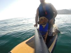 paddle surf con mi perro, La Herradura photo