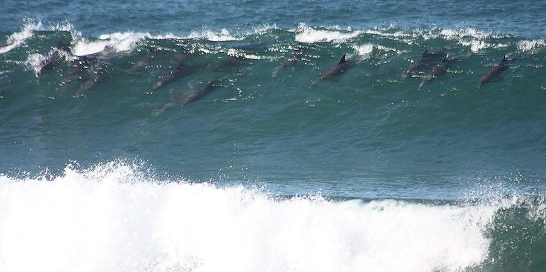 Feldskoen and Mazeppa Bays surf break