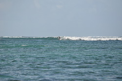 Little Reef, Morne Rights photo