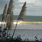 Raglan NZ, Raglan - Ngarunui Beach