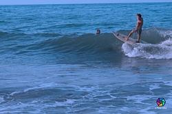 Surf, Palomino photo