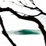 Emerald Isle in the Forest, Shark Island (Cronulla)