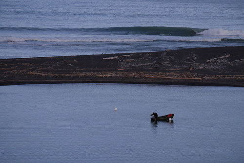 Wairoa River Mouth