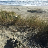 Rare sighting., Wharariki Beach