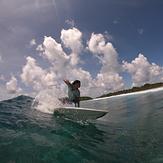 Surf Girl, Ninja's