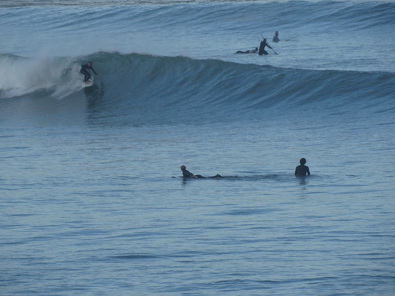 Shredder at The Cove, Palos Verde - Bluff Cove