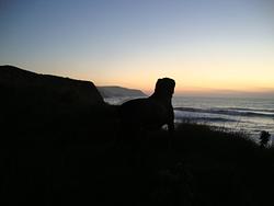 WIDEMOUTH, Widemouth Bay photo