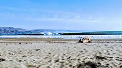 Log Dog, Doran Beach photo