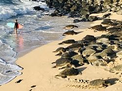 Sea Turtle Gromess, Hookipa photo