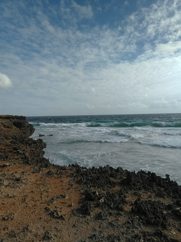 Boca or shark bay