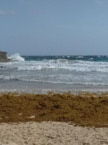 Boca also Shark Bay