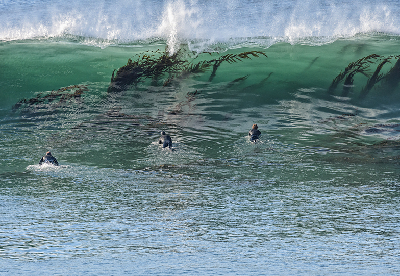 Kelp in the water, Steamer Lane-The Point