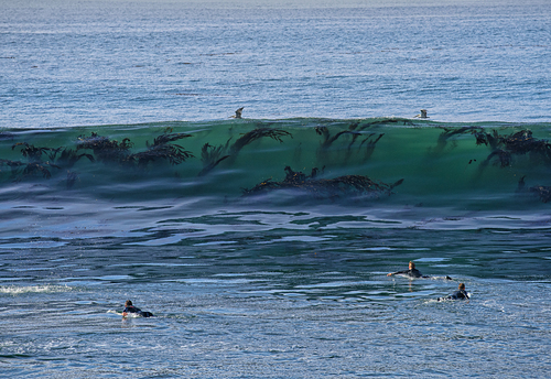 More kelp in the water, Steamer Lane-The Point