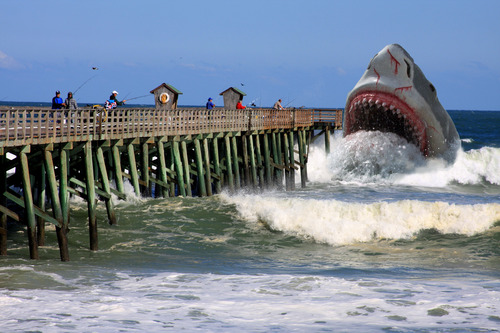 """""""Big Fish"""" at the Flagler Pier !"""