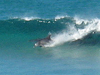 Rennies Beach surf break