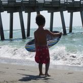 Little skimmer, Venice NorthandSouth Jetty
