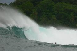 Panama Big Caribe, Silverbacks photo