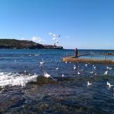 Feeding the pelican, Malabar