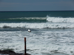Boat Ramp Reef - NE1.5M Swell Westerly wind, Waimarama photo
