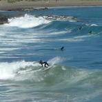 Nice left, Houghton Bay