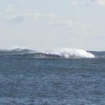 Feb 2012, Beadnell Bay