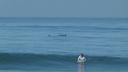 Acapulco Revolcadero Dolphins surf, Playa Princess photo