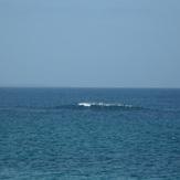 wave of gannet beach bawley point
