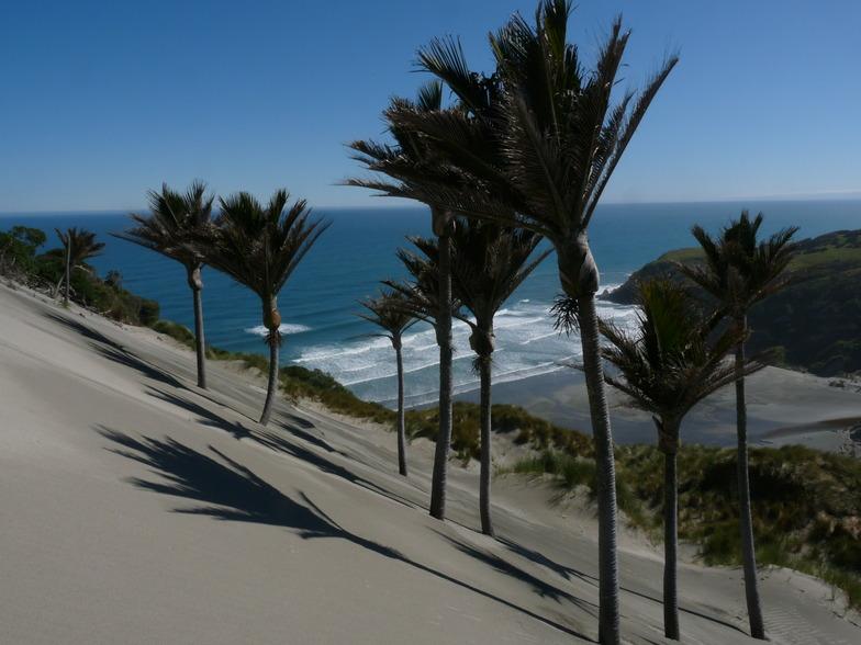 Nikau Palms and waves at Kaihoka Beach, Fergusons Beach