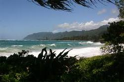 Pounders, Poundeers Beach photo