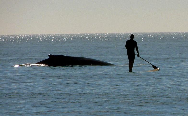 Topsail Island surf break