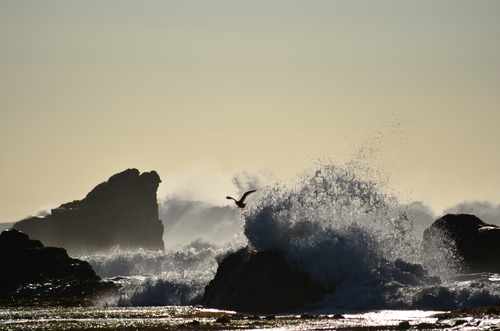 The Bird, Mavericks