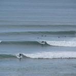 Bird Rocks little brother - summer swell, Sparras