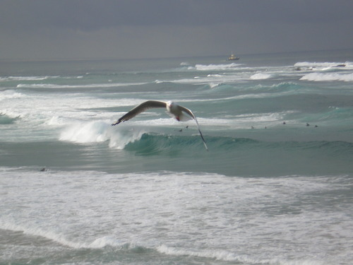 Empty left + bonus seagull, Nobbys Reef