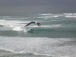 Empty left + bonus seagull, Nobbys Reef photo