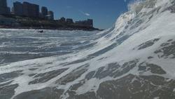 Derecha Playa Grande Mar del Plata Argentina, Biologia (Mar del Plata) photo