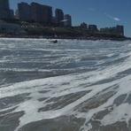Derecha Playa Grande Mar del Plata Argentina, Biologia (Mar del Plata)