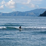 As small as it gets, Whangamoa