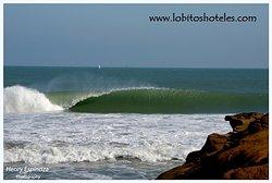Lobitos photo