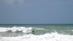 Bodyboarding Costa Sur, Embassy Beach photo