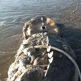 whale looking like a lizard, Oxnard Shores