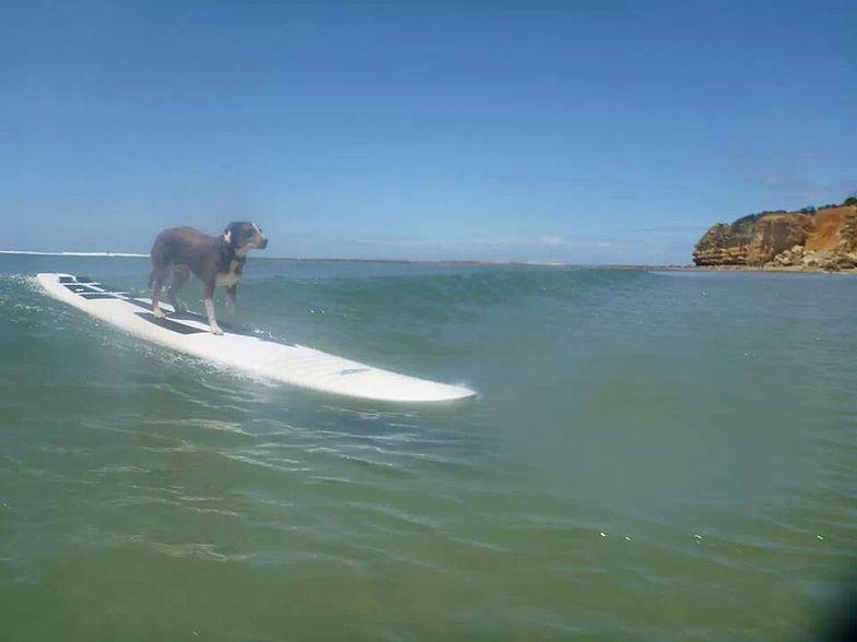 Point Roadnight surf break