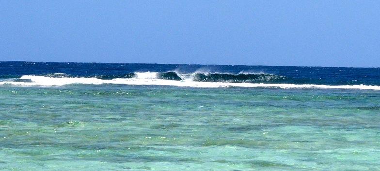 Erakor Island Reef Coral Left's