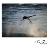 Air Barney, Steamer Lane-The Slot